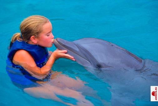 любовь дельфина