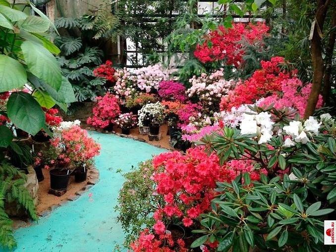 ботанический сад адресс